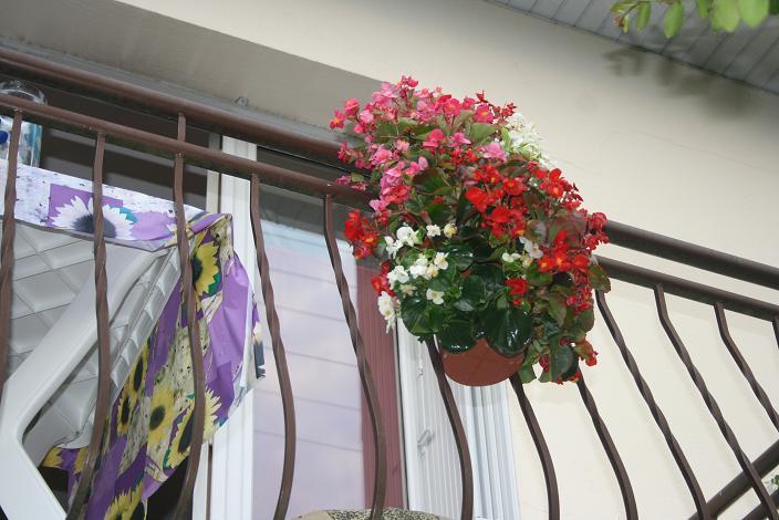 balcon-rue-des-lilas-1-website