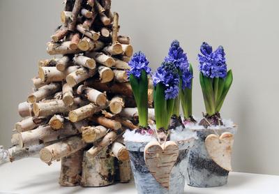 206197-hyacinthus-delft-blue1